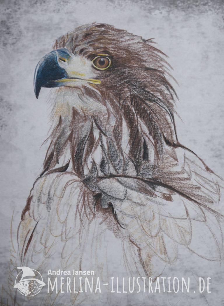 Farbstift-Skizze eines Steinadler-Portraits